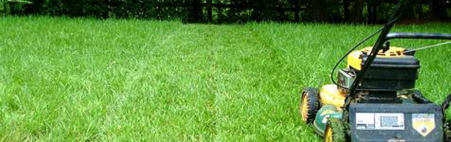 Lawn Care 101: Keep it Green