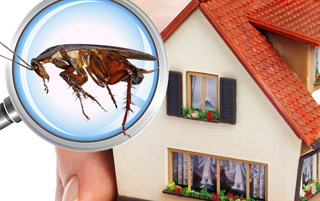 Home Maintenance: Natural Pest Control