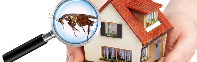 Home Maintenance: Natural Pest Control