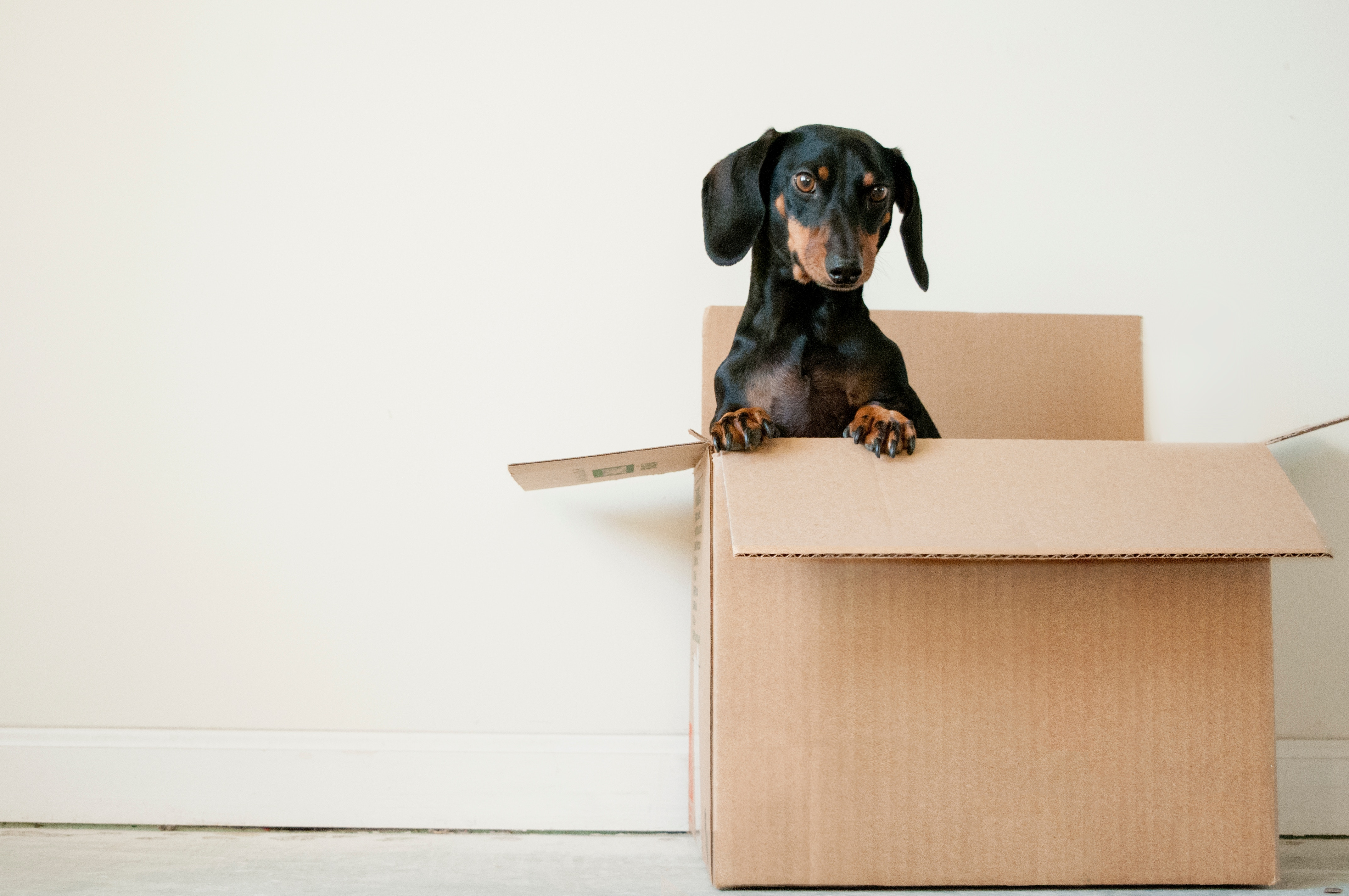 Moving? Check out these tips!